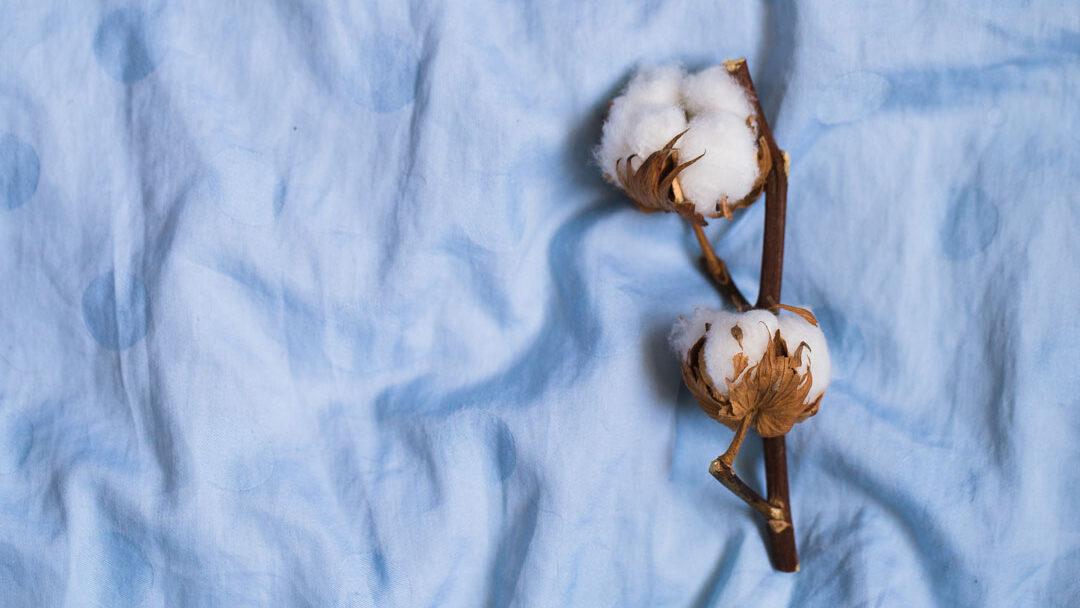 algodon bebe suda